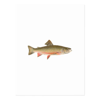 Brook Trout Art Post Cards