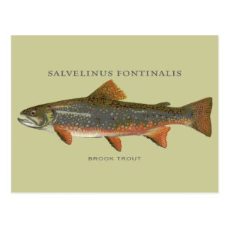 Brook Trout Fishing Postcard