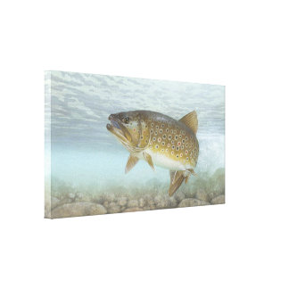 Brook Trout Painting Gallery Wrapped Canvas