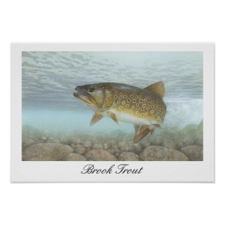 Brook Trout Painting Poster