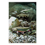Brook Trout Posters