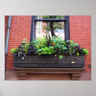 Brooklyn Window Poster