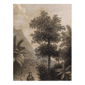 Broom Road, Tahiti Postcard
