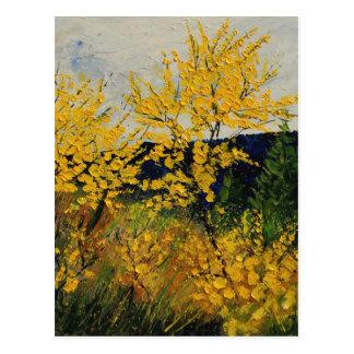 brooms shrubs postcard