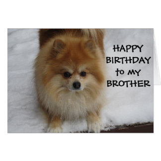 """BROTHER"" HAPPY BIRTHDAY SAYS THE POMERANIAN GREETING CARD"