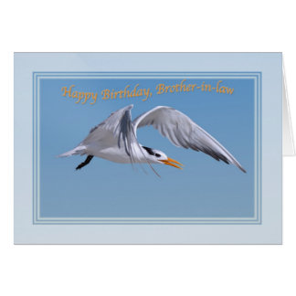 Brother-in-law's Birthday with Royal Tern Bird Greeting Card