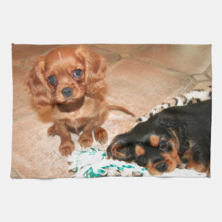 Brother Puppies Cavalier King Charles Spaniels Towel