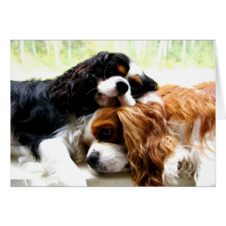 Brothers Cavaliers Greeting Card
