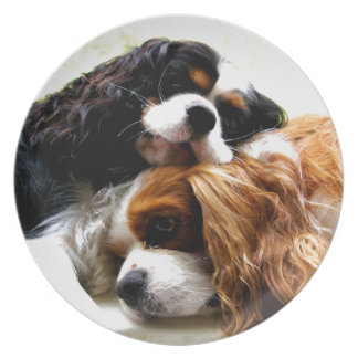 Brothers Cavaliers Plate