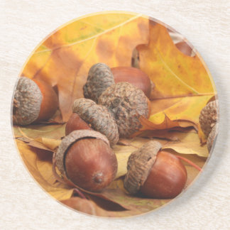 Brown Acorns On Autumn Leaves, Close Up Coasters