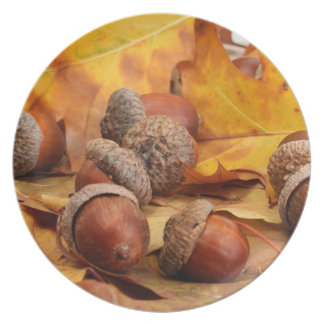 Brown Acorns On Autumn Leaves, Close Up Dinner Plates