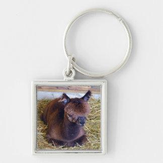 Brown Alpaca Key Ring