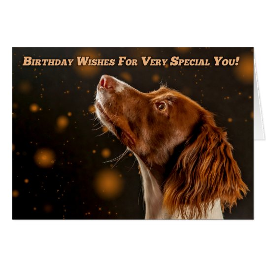 Brown And Cream Springer Spaniel, Birthday Wishes Card