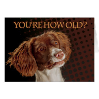 Brown And Cream Springer Spaniel You re how old Greeting Cards