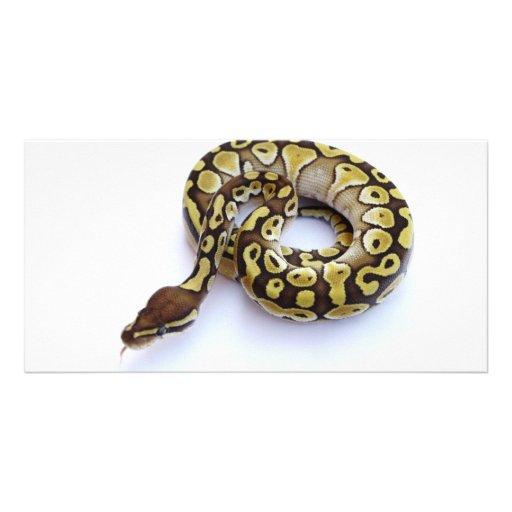 Brown and Gold Ball Python 2 Custom Photo Card