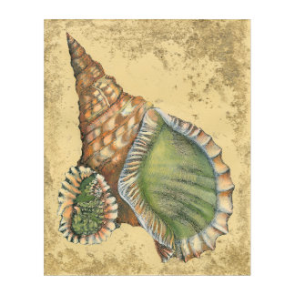 Brown and Green Seashell Acrylic Print
