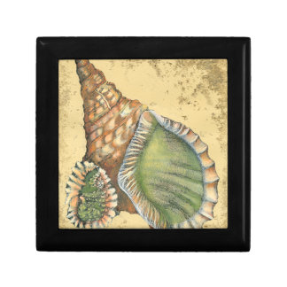 Brown and Green Seashell Small Square Gift Box