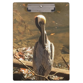 Brown and Grey bird with long beak Clipboard