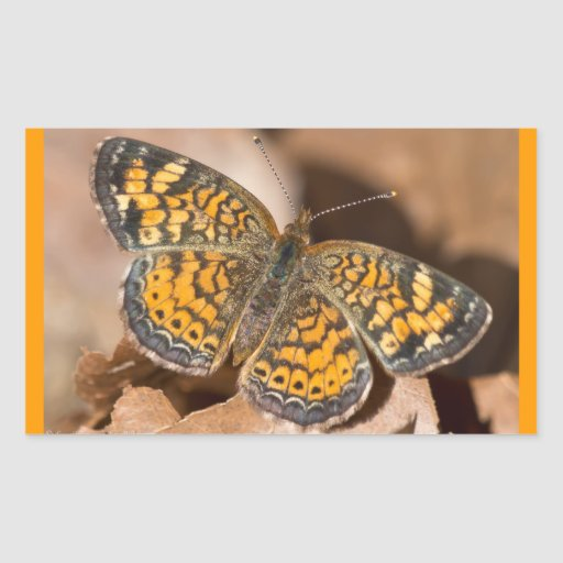 Brown and Orange Moth Apparel and Gifts Rectangle Stickers