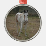 Brown and White Colt Christmas Tree Ornaments
