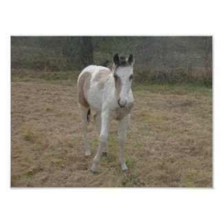 Brown and White Colt Photo Art