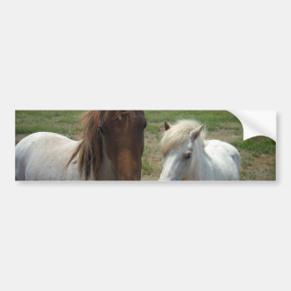 Brown_And_White_Face_Horses,_ Bumper Sticker