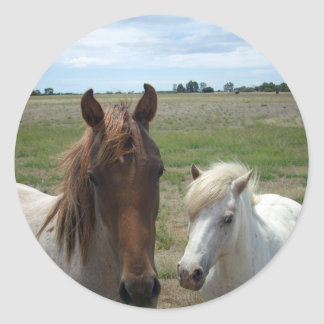 Brown_And_White_Face_Horses,_ Round Sticker