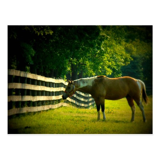 brown and white horse grazing postcard