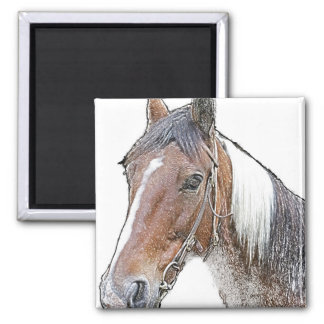 Brown and White Horse Square Magnet