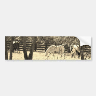 Brown  and white Horsess in tree. Sepia Tone Bumper Stickers