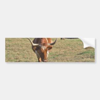 Brown and White Longhorn Bull Blue Sky Bumper Sticker