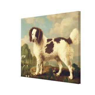 Brown and White Norfolk or Water Spaniel, 1778 (oi Canvas Print