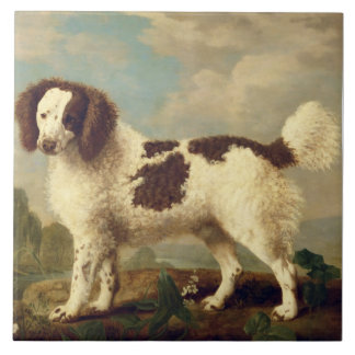 Brown and White Norfolk or Water Spaniel, 1778 (oi Large Square Tile