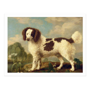 Brown and White Norfolk or Water Spaniel, 1778 (oi Postcard