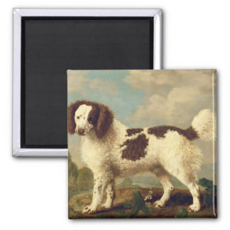 Brown and White Norfolk or Water Spaniel, 1778 (oi Square Magnet
