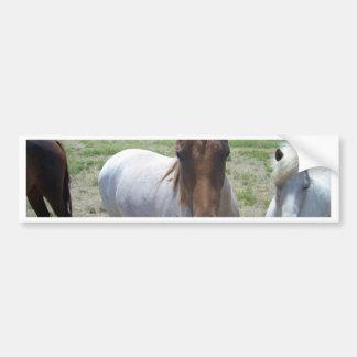 Brown_And_White_Pony,_ Bumper Sticker