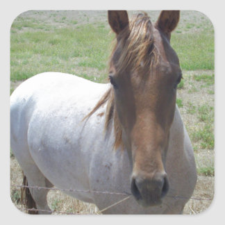 Brown_And_White_Pony,_ Square Sticker