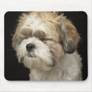 Brown and white Shih Tzu with eyes closed Mouse Pad