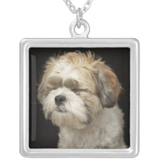 Brown and white Shih Tzu with eyes closed Silver Plated Necklace