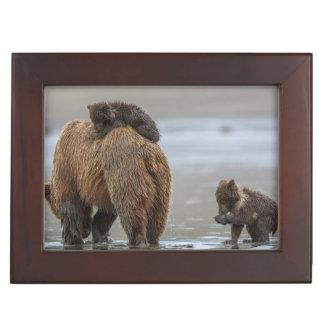 Brown bear and cubs keepsake box