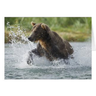 Brown Bear chasing salmon in river Card