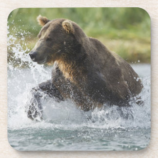 Brown Bear chasing salmon in river Coaster