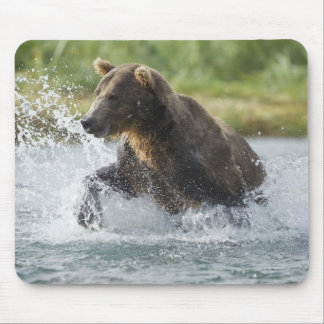 Brown Bear chasing salmon in river Mouse Pad