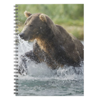 Brown Bear chasing salmon in river Notebooks