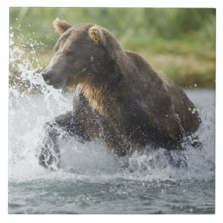 Brown Bear chasing salmon in river Tile