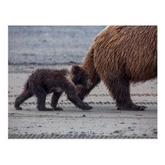 Brown Bear cub Postcard