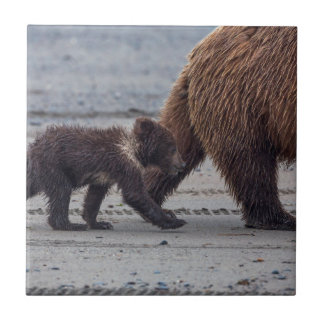 Brown Bear cub Tile