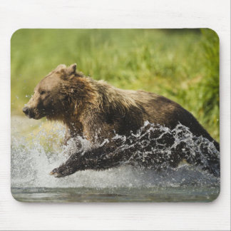 Brown bear, female, fishing for salmon mouse pad