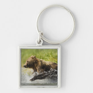 Brown bear, female, fishing for salmon Silver-Colored square key ring