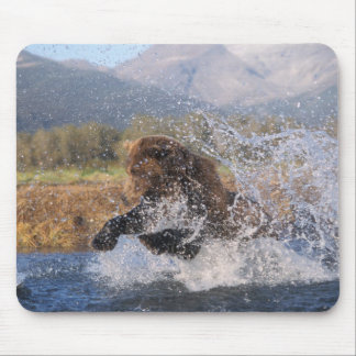 Brown bear, grizzly bear, catching pink salmon, mouse pad
